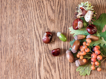 acorn: Several acorns, chestnuts and rowan branch lie on the dry oak leaves