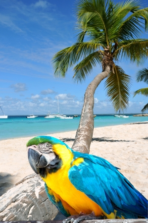 Caribbean beach with palm tree and parrot photo