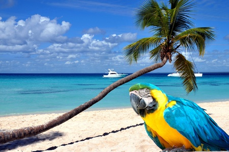 Caribbean beach with palm tree and parrot