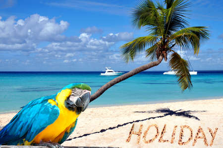 Caribbean beach with palm tree, parrot and word holiday in the sand  photo