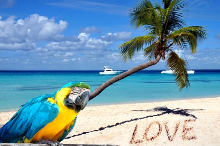 Caribbean beach with palm tree, parrot and word love in the sand photo