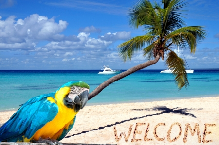 Caribbean beach with palm tree, parrot and word welcome in the sand  photo