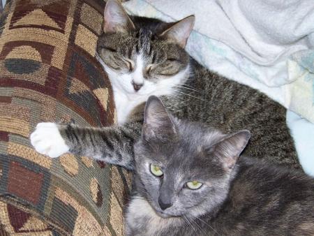 Cat Furball resting on chair 2 Imagens