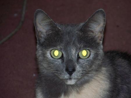 My Cat Princess
