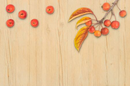 Autumn composition leaves fruits and branch of malus floribunda on light wood background top view flat lay copyspace Stock Photo