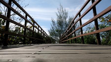 Bridge in deep natural green forest