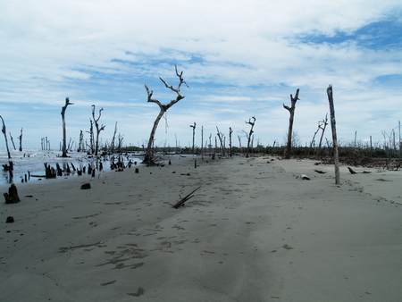 Leafless Trees at beach Banco de Imagens