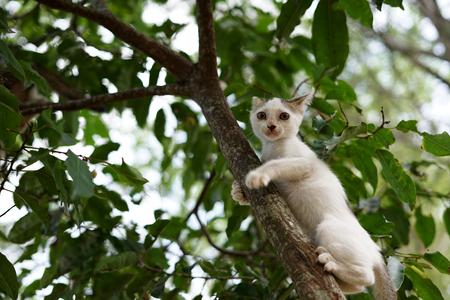 Kitten climbing in the tree