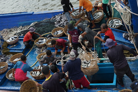 Banda Aceh, Indonesia - September 22, 2018: Local fishermen are transporting tuna fish from their vessels to the seaport at Lampulo, Banda Aceh