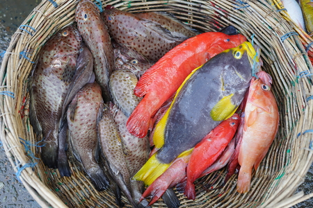 Fresh grouper fish on basket at fish market Archivio Fotografico