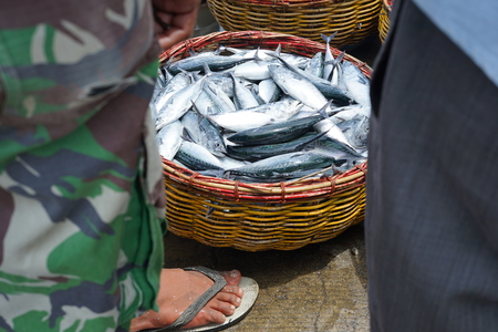 Selection of fresh Mackerel fish for sale at Seafood Market Stock Photo