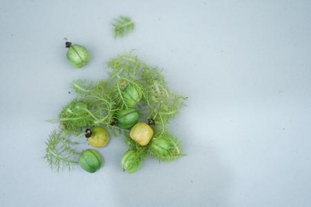 Wild Water Lemon or Passiflora foetida, Fresh Asian fruit