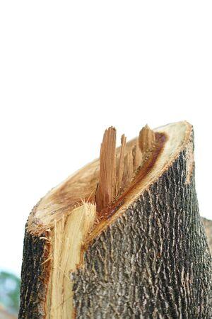 Big tree chopped cut stump at rainforest 写真素材