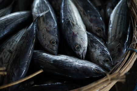 Closeup of pile Tuna fish at fishing harbour in Indonesia 写真素材