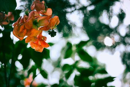 pink flowers blossoms over pastel colors at summer time 写真素材