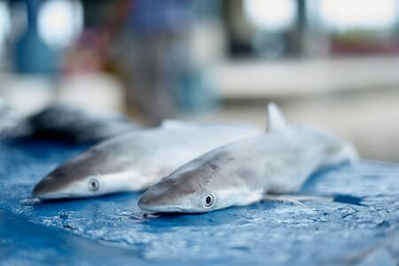 Small baby shark for sale at Seafood Market