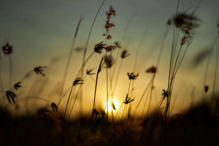 Early morning sun shining on wildflowers and weeds growing in a grassy field