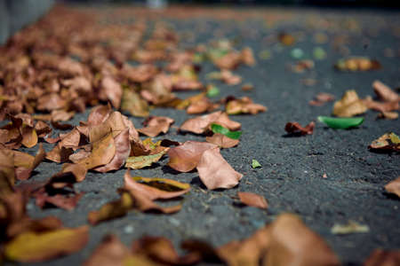 Autumn leaves on the road at empty city street