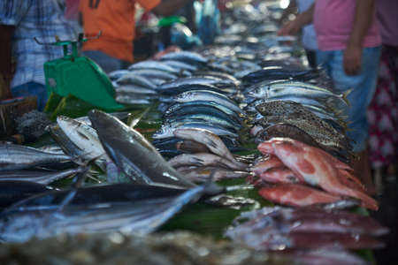 Pile of fresh fish for sale at Traditional seafood market stall