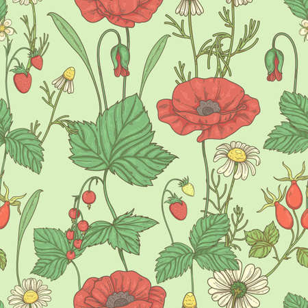 Seamless pattern with wildflowers and berries. Pattern with poppies, currants, rose hips and strawberries 矢量图像