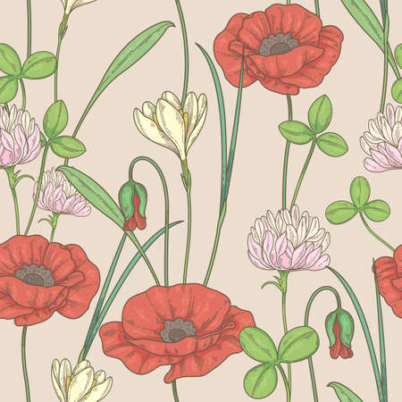 seamless pattern with wildflowers. Pattern with poppies, clover and echinacea 矢量图像