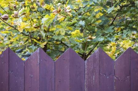Purple wooden fence and autumn garden photo
