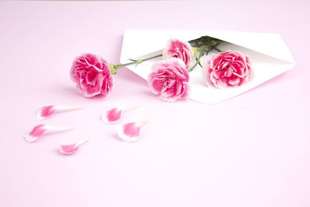 Carnations in white envelope on pink background