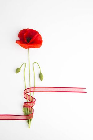 Red poppy on white background Stock Photo
