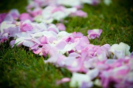 Petals Imagens