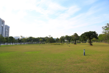 Lawn in the city