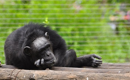 nursing class: Gorilla