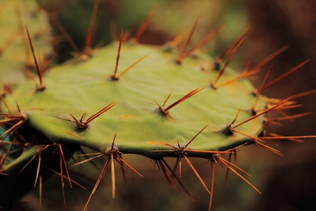 Cactus needles spring out in all directions, don t touch  photo