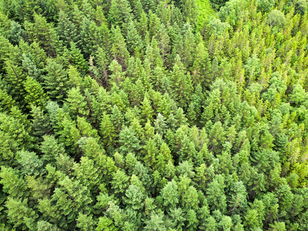overhead aerial shot of green forest Stock fotó