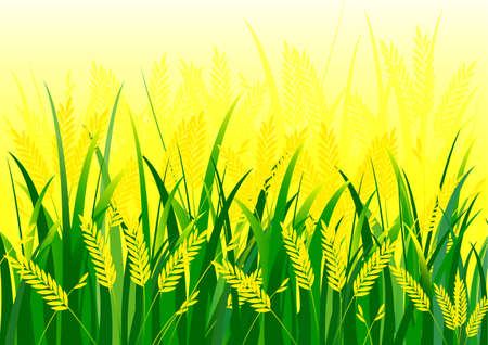 rice field: Rice field vector background