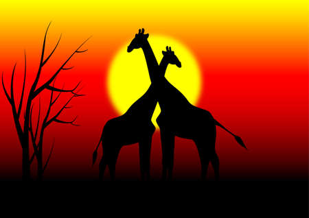 africa sunset: giraffes in africa with sunset background Illustration