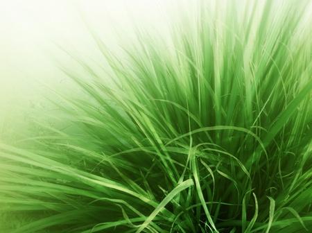 Grass Blades photo