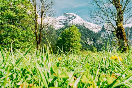 barnwood: mountain spring Stock Photo