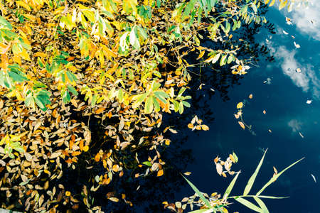 barnwood: Autumn forest leaves water indiansummer trees birch Stock Photo