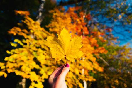 barnwood: Yellow autumn forest leaf