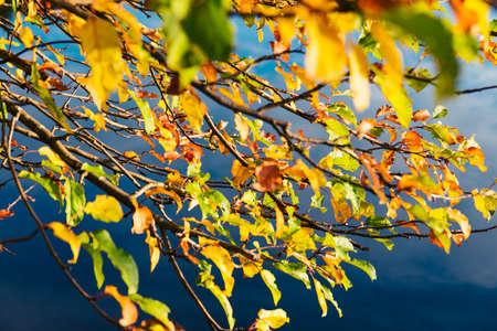 barnwood: Autumn forest leaves