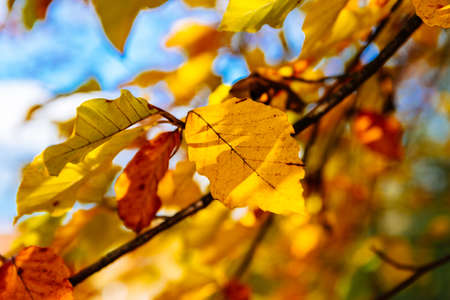 barnwood: Yellow red and orange autumn forest leaves