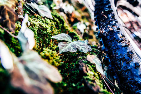 mtb forest nature spring wood rural treetrunk leaf Stock Photo