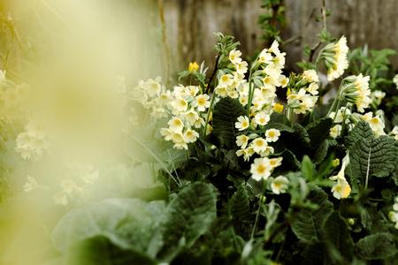 spring awakening flowers Stock Photo