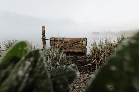 frozen reed marshland kochelsee bavaria mist fog