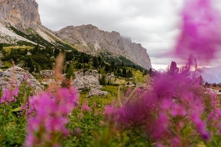 dolomites lagazuoi cortina ampezzo pink meadow flowers