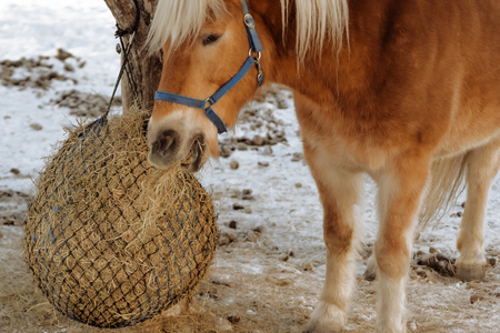 wildwest winter horse hay snow Stock Photo
