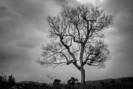 Black and white of alone tree on top of hill with cloudy sky, countryside