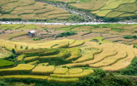 Small stream flowing through terraced fields  Tu Le Valley, Mu Cang Chai District, Yen Bai Province, Vietnam