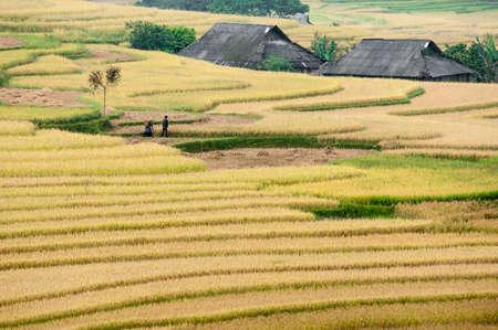 Couple walking on the terraced fields  Tu Le Valley, Mu Cang Chai District, Yen Bai Province, Vietnam Stock Photo