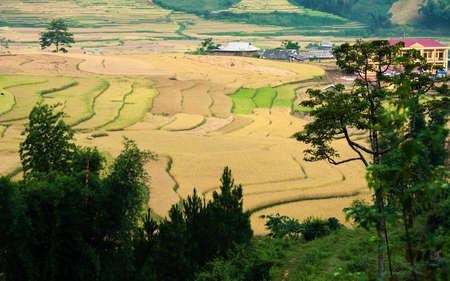 Terraced fields, Mu Cang Chai district, Yen Bai province, Vietnam